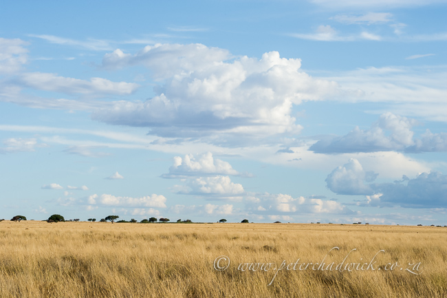 Benfontein Grasslands by wildlife and conservation photographer Peter Chadwick