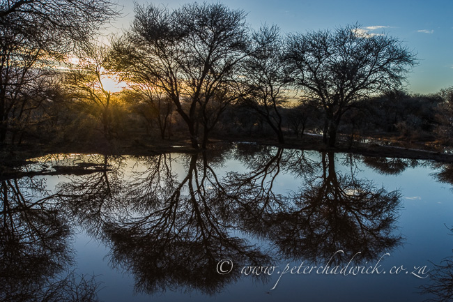 Rooipoort dawn by wildlife and conservation photographer Peter Chadwick