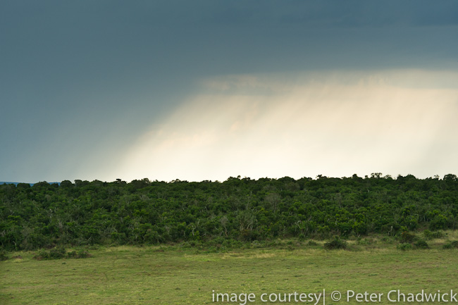 Rain falls across Addo Elephant NAtional Park by wildlife and conservation photographer peter chadwick