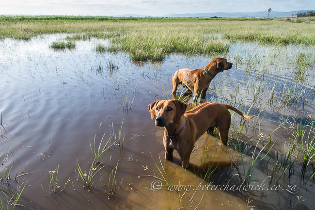 Agulhas plain flooding by wildlife and conservation photographer Peter Chadwick