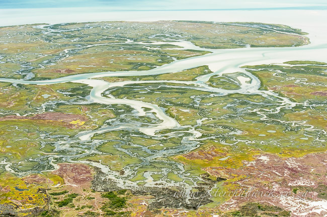 Langebaan Lagoon salt marshes by wildlife and conservation photographer Peter Chadwick