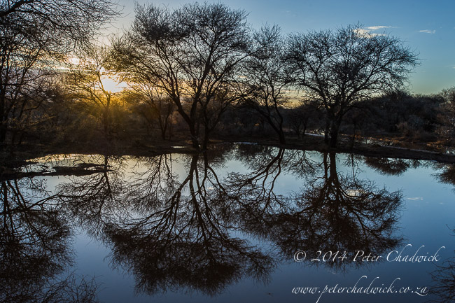 Rooipoort Nature Reserve by wildlife and conservation photographer Peter Chadwick
