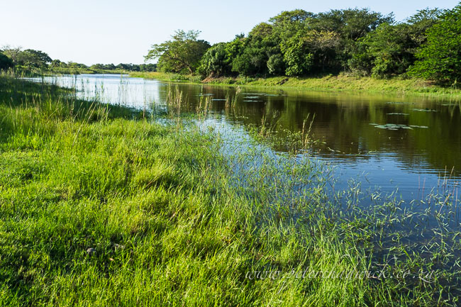 Bonamanzi wetland by wildlife and conservation photograpger Peter Chadwick