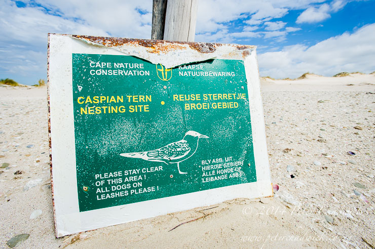Caspian Tern nesting colony signage by wildlife and conservation photographer Peter Chadwick