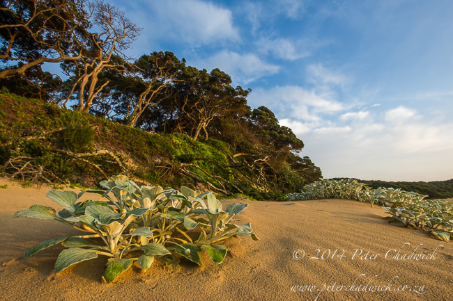 Dwesa coastal forest by wildlife and conservation photographer Peter Chadwick