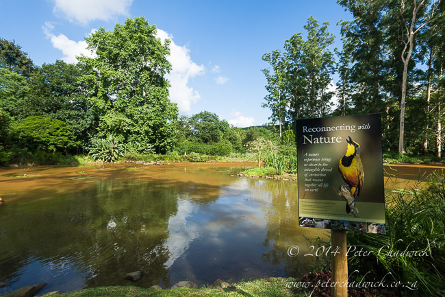 Botanical Garden wetlands by wildlife and conservation photographer Peter Chadwick