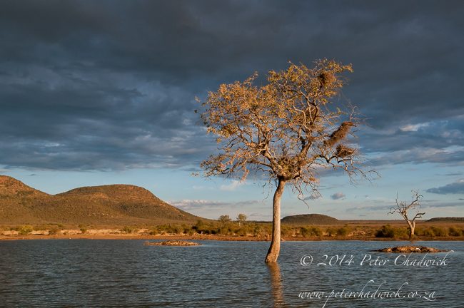 Madikwe waterhole at dusk by wildlife and conservation photographer Peter Chadwick