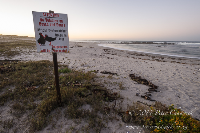 Oystercatcher warning sign by wildlife and conservation photographer Peter Chadwick