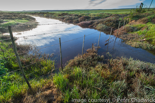 Bredasdorp wetland by wildlife and conservation photographer Peter Chadwick