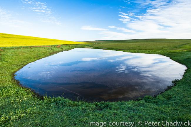 Farm dam by wildlife and conservation photographer Peter Chadwick