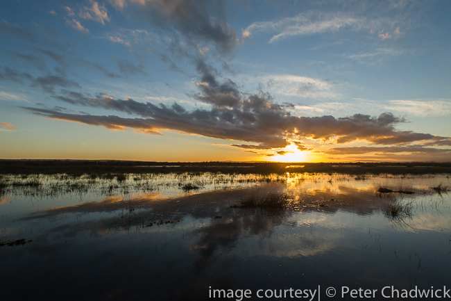 Soetendaals vlei at dusk by wildlife and conservation photographer Peter Chadwick