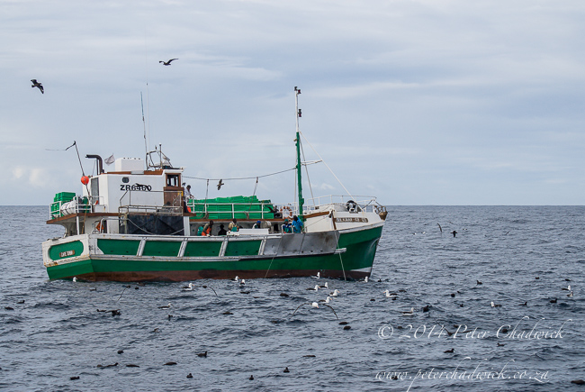 longliner surrounded by pelagic birds by wildlife and conservation photographer Peter Chadwick
