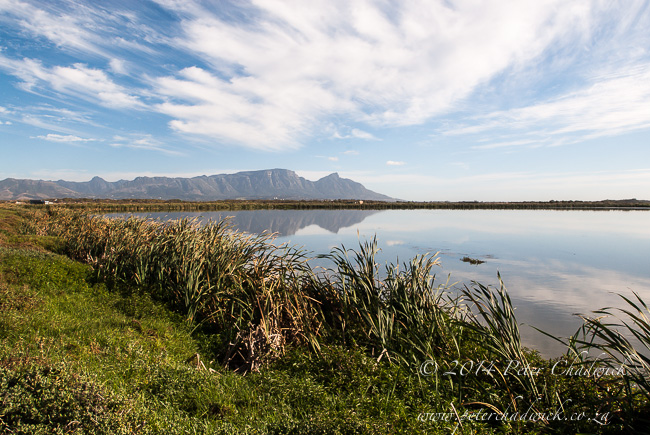 Strandfontein Sewage Works by wildlife and conservation photographer Peter Chadwick