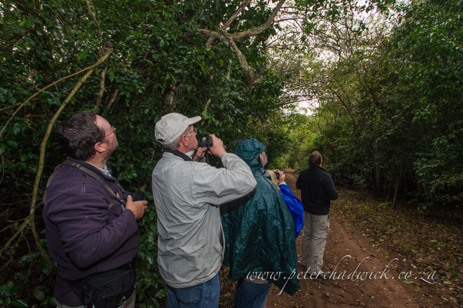 Birding in the forests of Catapu by wildlife and conservation photographer Peter Chadwick