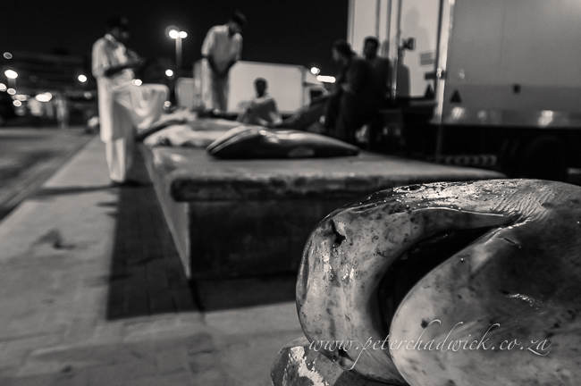 Tiger shark at the dubai fish market by wildlife and conservation photographer Peter Chadwick