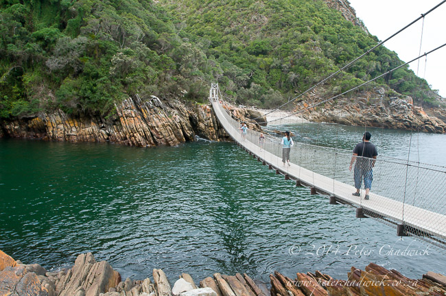 storms river swing bridge by wildlife and conservation photographer Peter Chadwick