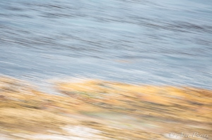 Tern Roost In Flight -An Abstract Perspective
