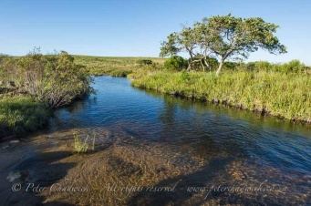 Mkambati river by wildlife and conservation photographer peter chadwick.