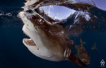 Wild Thing | ©Allen Walker Photography | Marine Week 2914