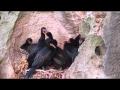 CapeNature Conservation: Arniston Caves