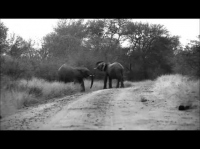 Safaries in Africa | Kruger National Park Elephant behaviour