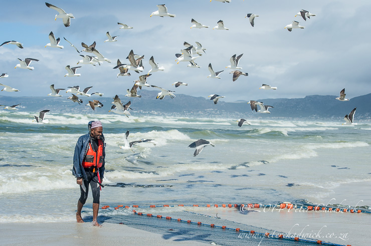 Trek-net fisher on strandfontein beach by wildlife and conservation photographer Peter Chadwick