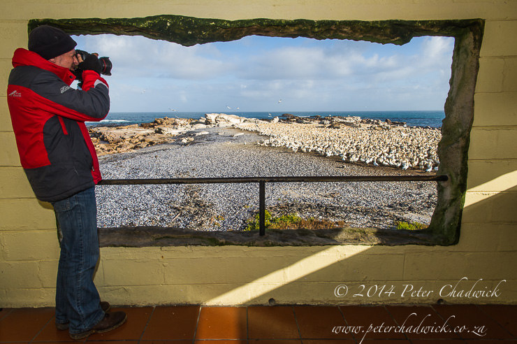 Lamberts Bay Bird Island viewing platform by wildlife and conservation photographer Peter Chadwick