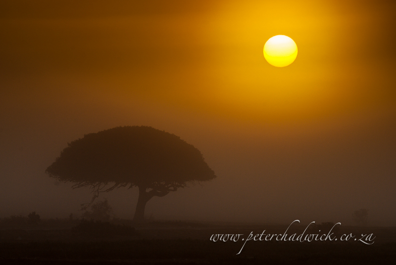 de hoop misty sunrise by wildlife and conservation photographer Peter Chadwick