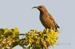 Amethyst Sunbird by wildlife and conservation photographer Peter Cadwick.jpg