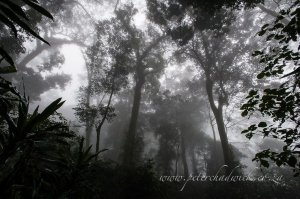 Gornongosa mist belt forest by wildlife and conservation photographer Peter Chadwick